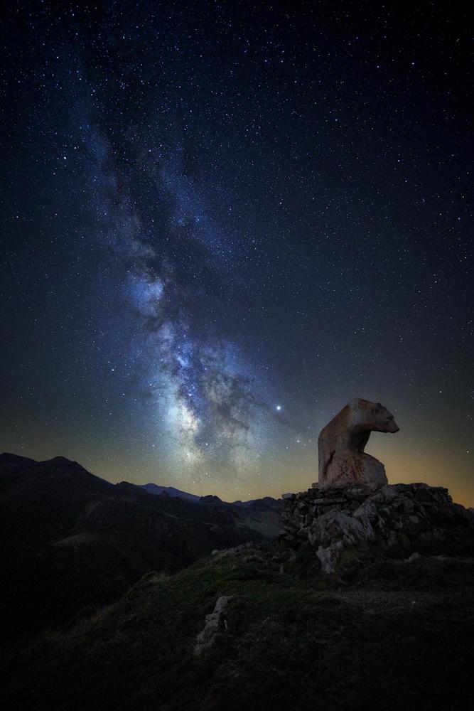 The Bear by Ignacio Municio