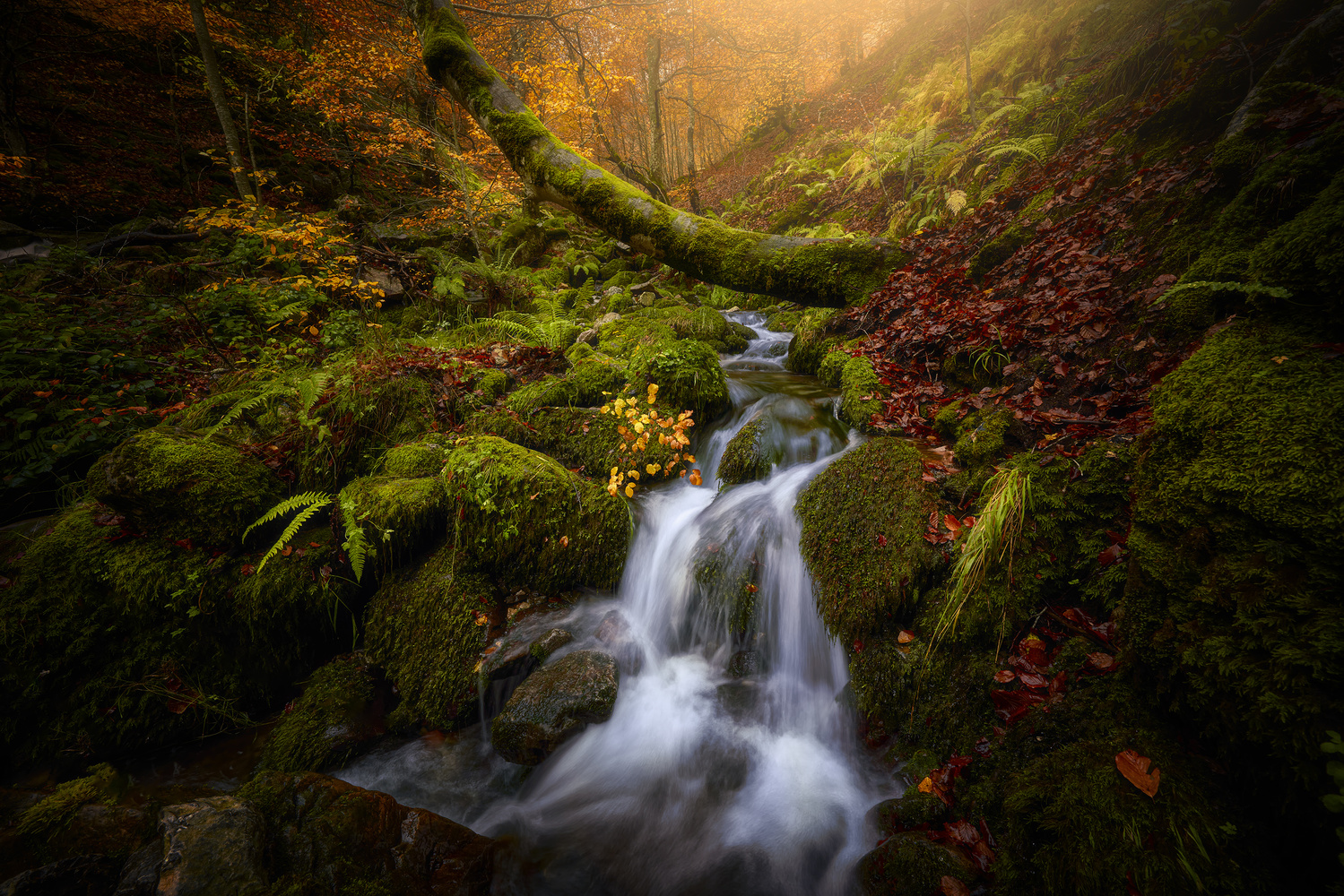 Autumn in Argovejo by Ignacio Municio