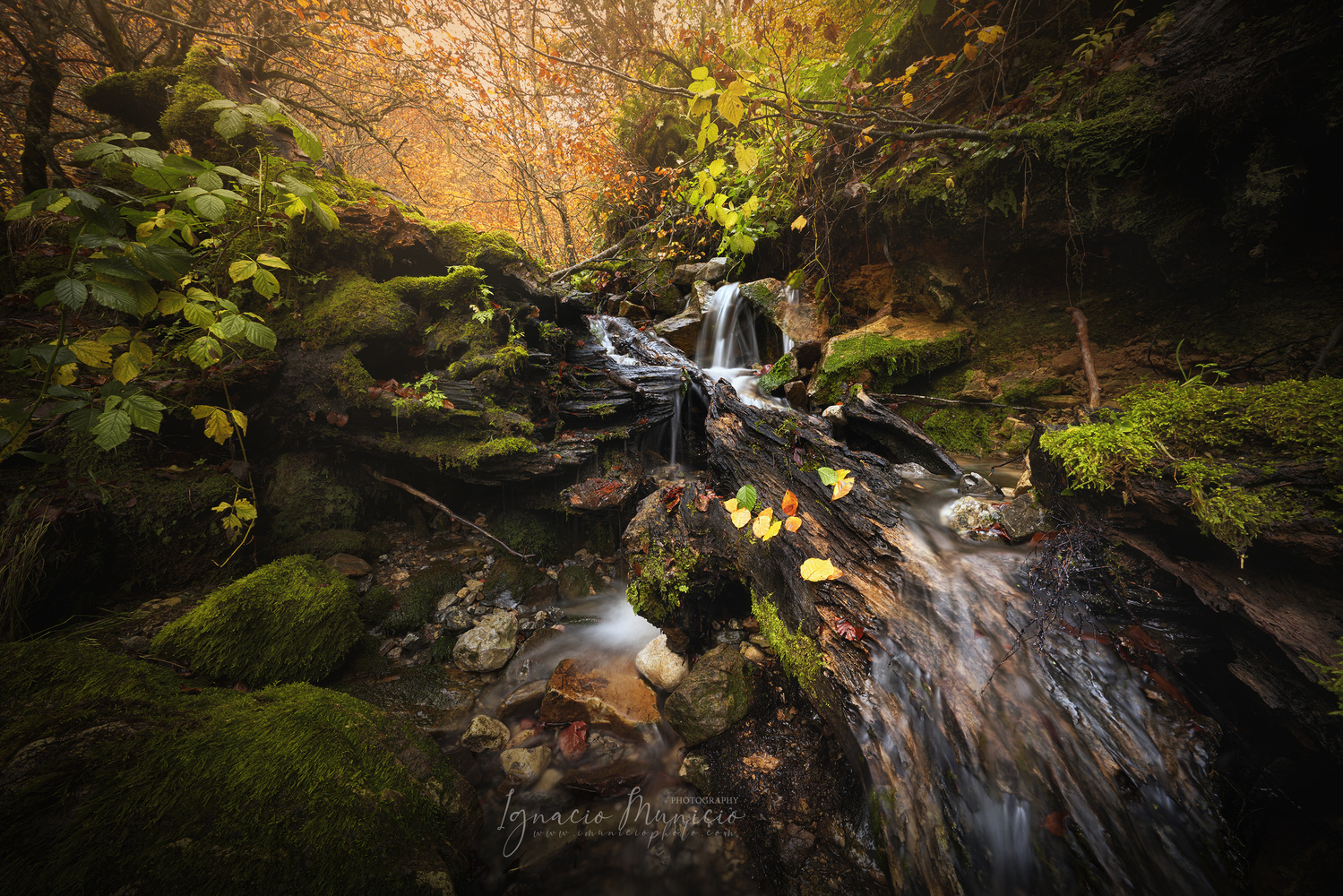 Forest by Ignacio Municio