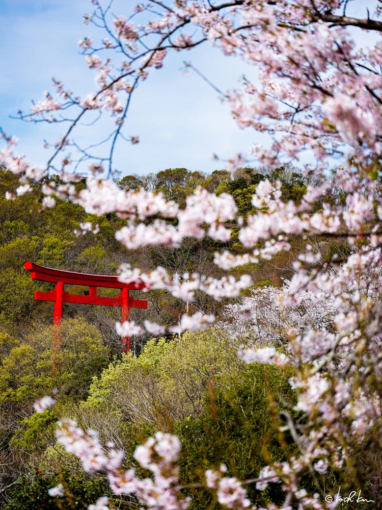 Spring in Tsushima by Koichi Kimura