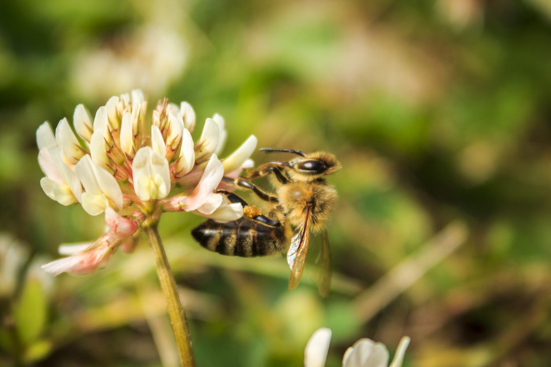 Bee by Natasha Weedman