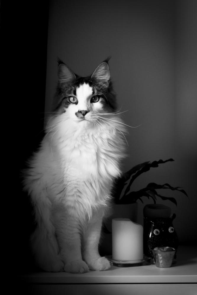 Portrait of Floki by Natasha Weedman
