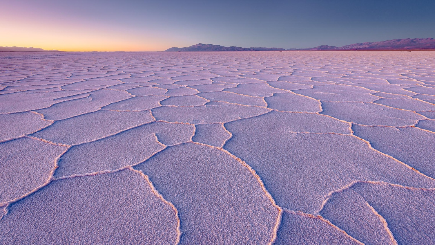 Salt Of The Earth II by Check My Dream
