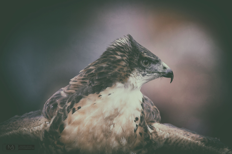 Portrait of a raptor by Michael Johler