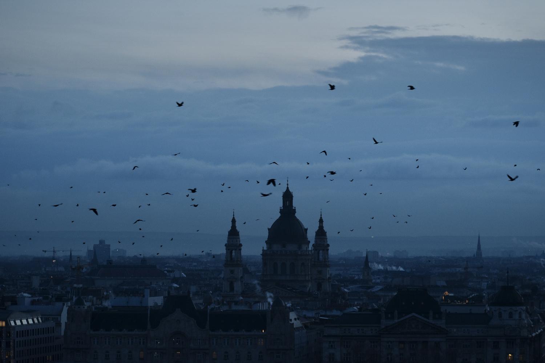 Birds over city by Stefan Gonzalevski