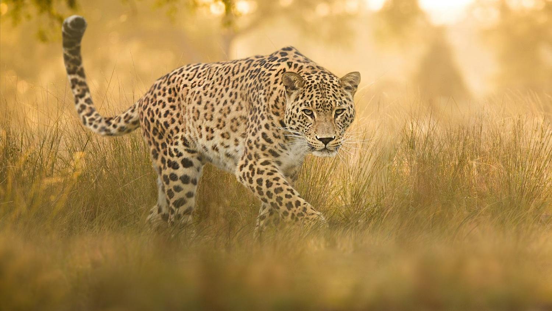 The Predator by Kevin Plovie