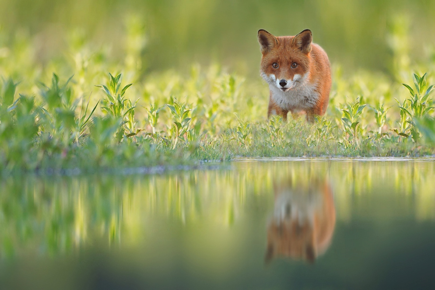 Reflection by Kevin Plovie