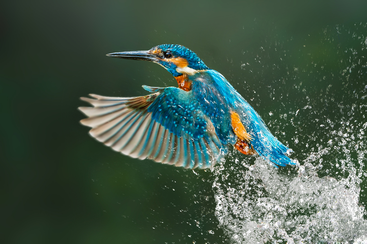 The Dive by Kevin Plovie