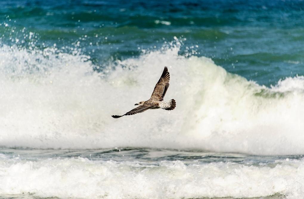 Seagull by Svetlin Nikolov