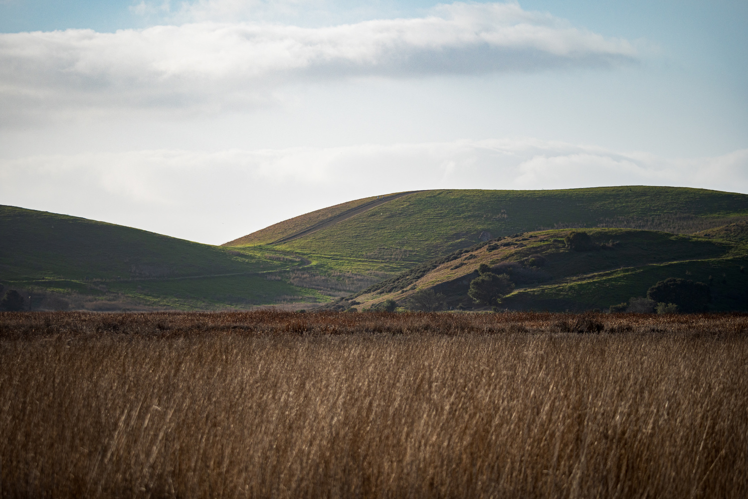 Evening at Coyote Hills by David Yoon