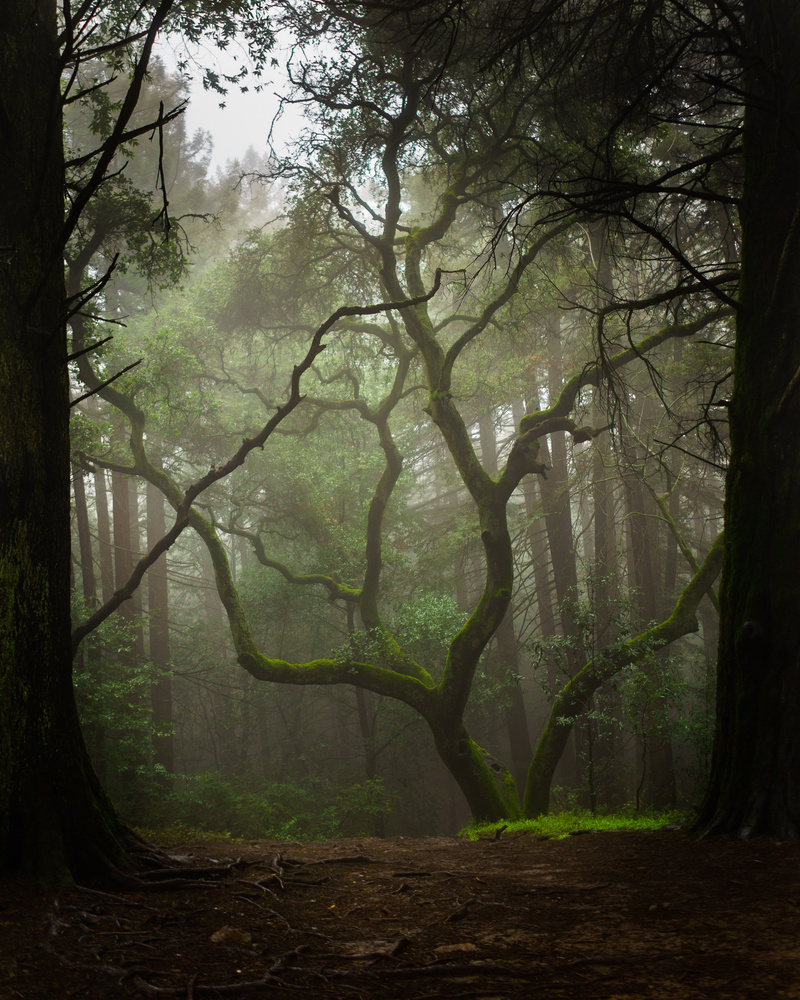 Tree in a Clearing by David Yoon