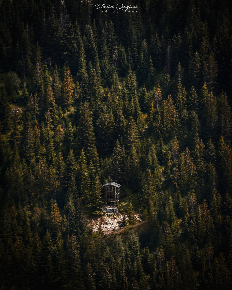 Building in the middle of the woods by Ubejd Qazimi