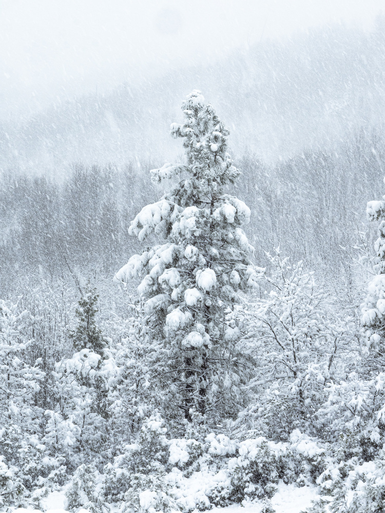 Late Winter Snow Storm by Tim McBroome