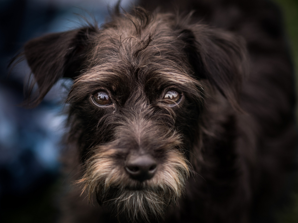 Abby's Dog by Tim McBroome