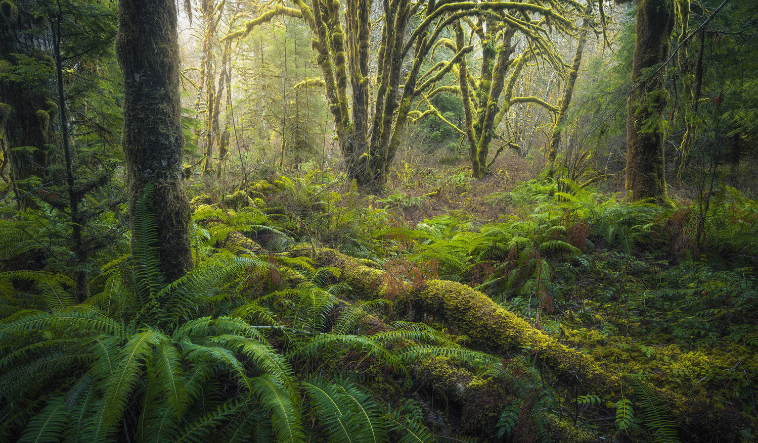 Mossy Grove by Eric Thiessen