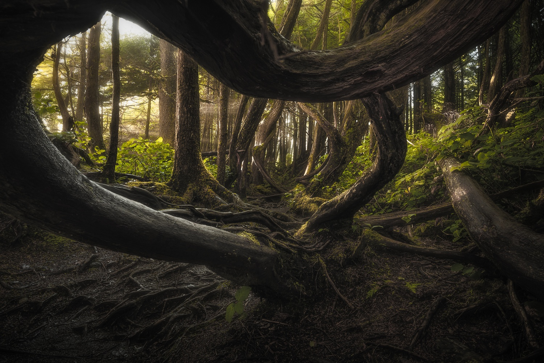Murky Woodlands by Eric Thiessen