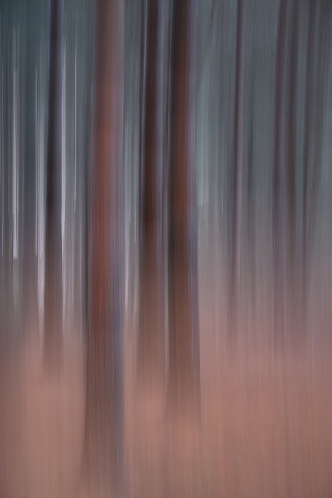 Between Every Pine by Stephanie Johnson (StephJohnPhoto)