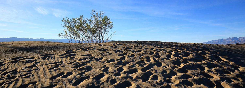 sand dunes Death Valley by Jean Dawkins