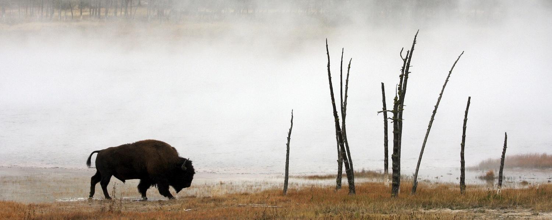 Yellowstone by Jean Dawkins