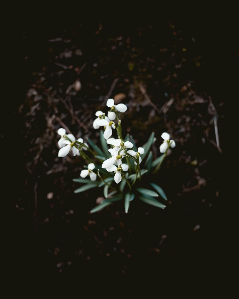Spring Flowers by Niklas Hamann