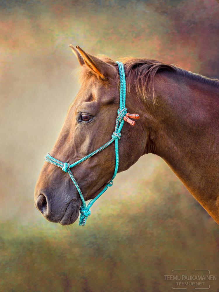 Pony and a Backdrop by Teemu Paukamainen