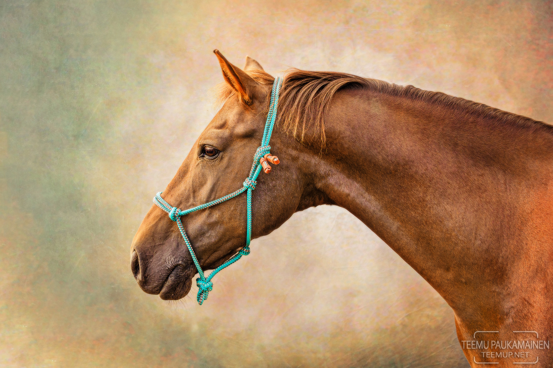 Pony and a Backdrop II by Teemu Paukamainen