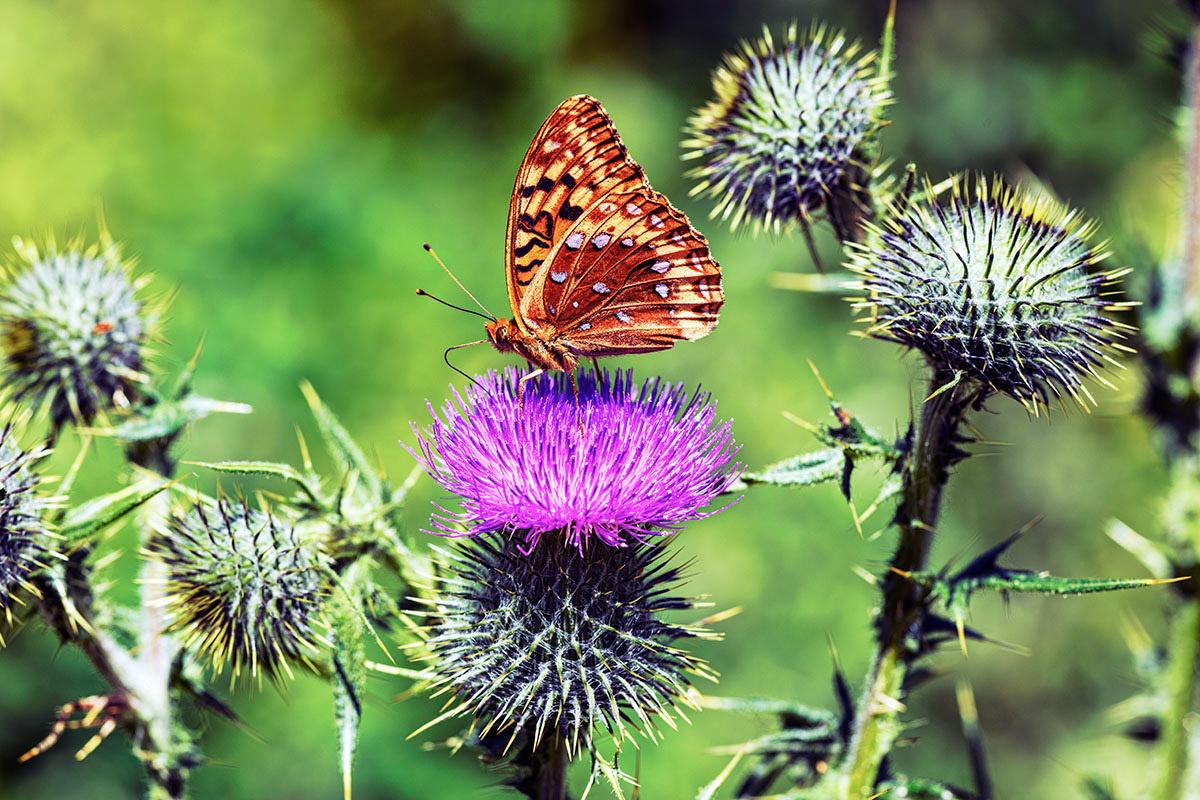 Butterfly by Glenn Barclay