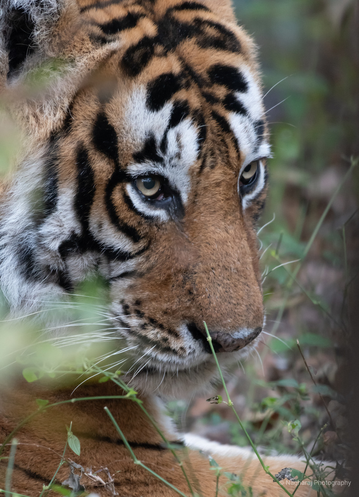 You are being watched! by Nagharajan R