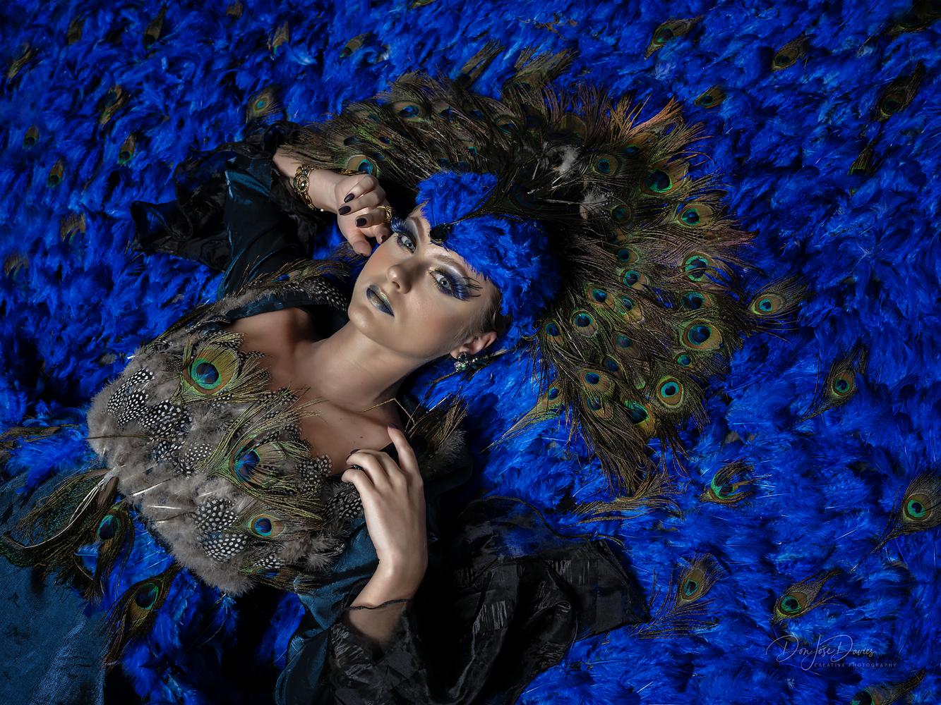 Peacock by Don Jose Romulo Davies
