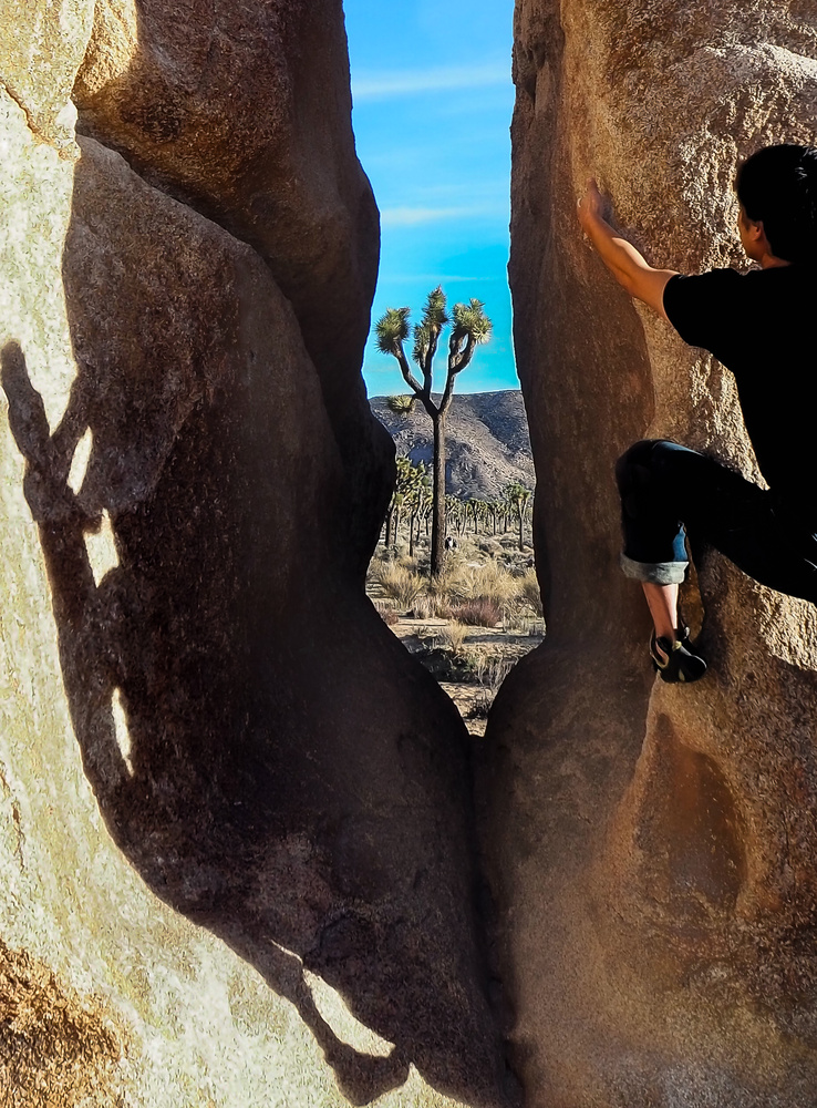 Climbing in J tree by Jacob Camarillo