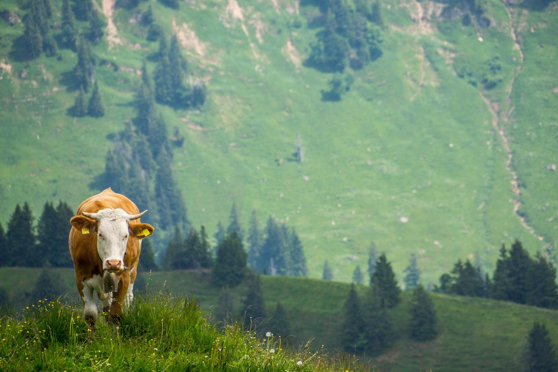 Bavaria, Germany by Torsten Sasse