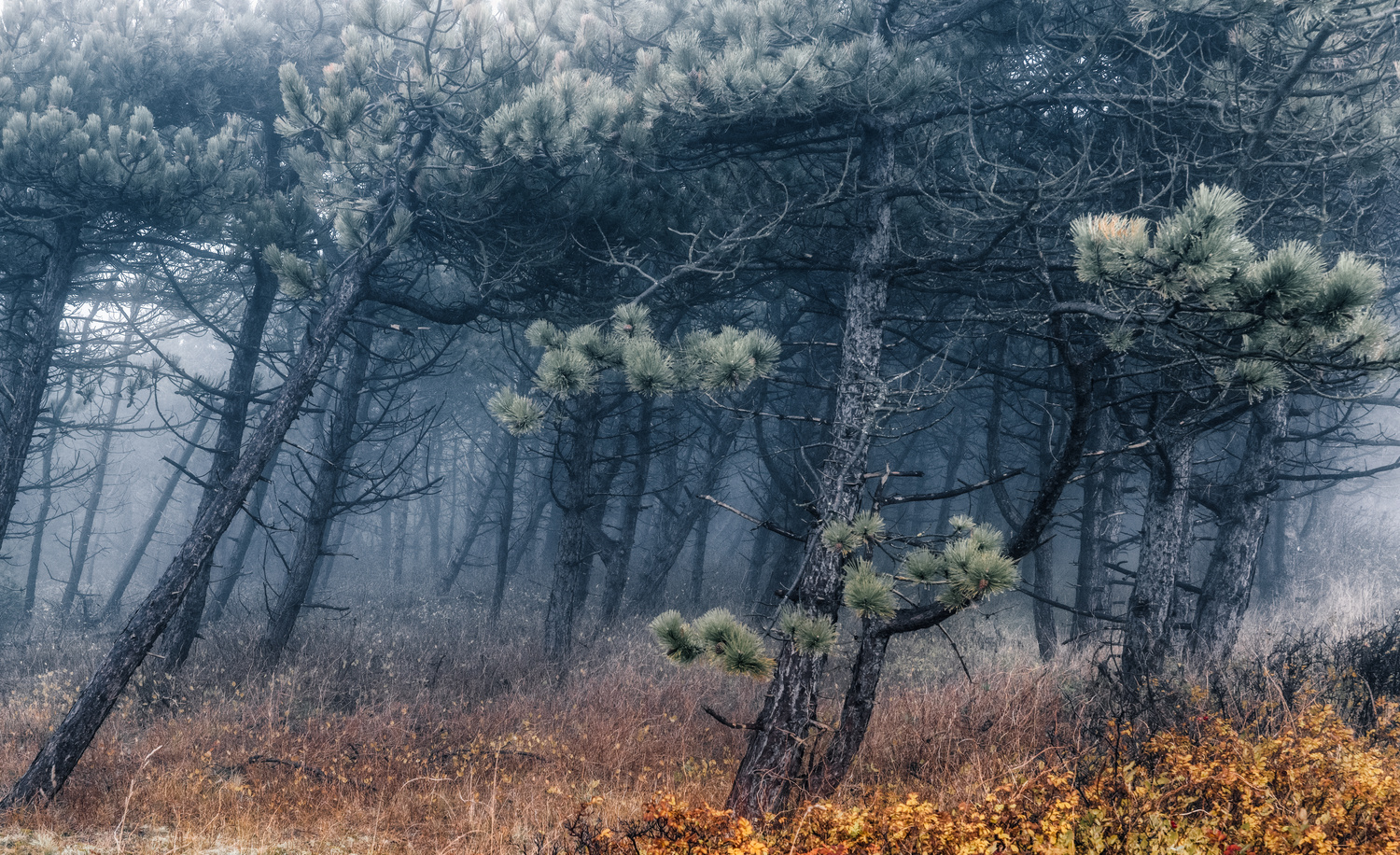 Deep into a foggy November forest on Sylt island. by Torsten Sasse
