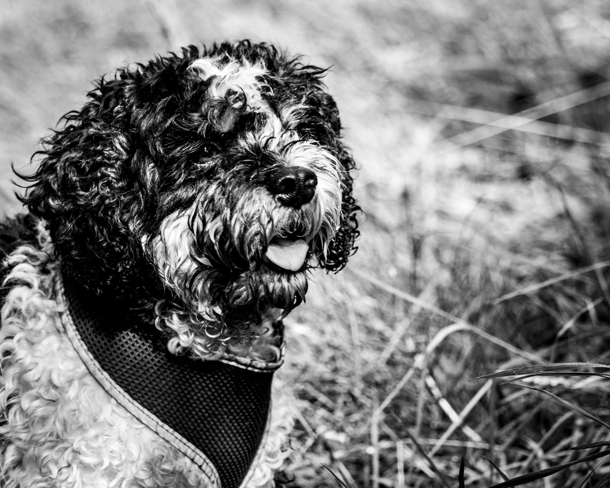 Hamish by Mike Young