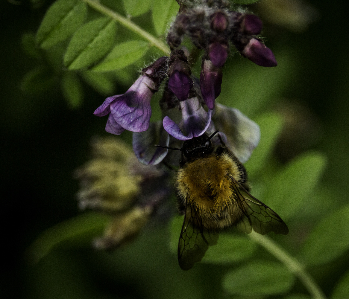 Bee at work by Mike Young