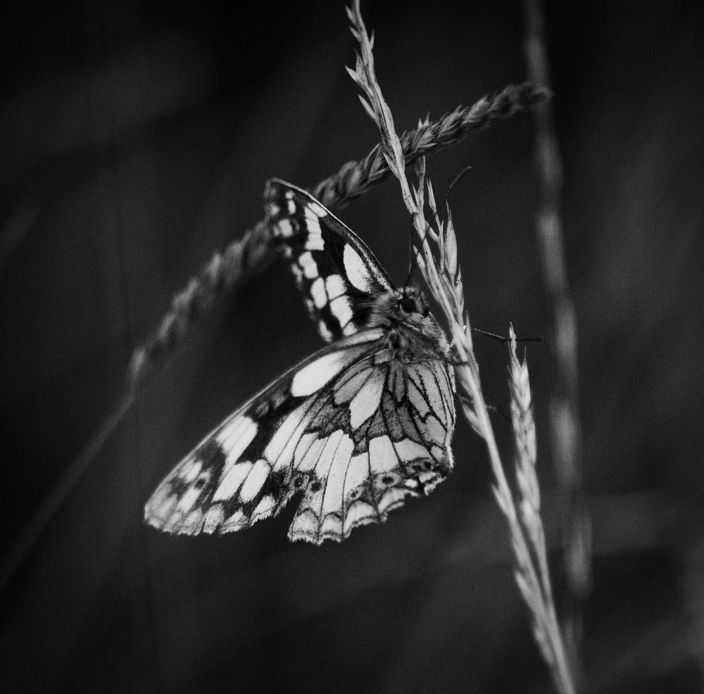Butterfly - Mono by Mike Young