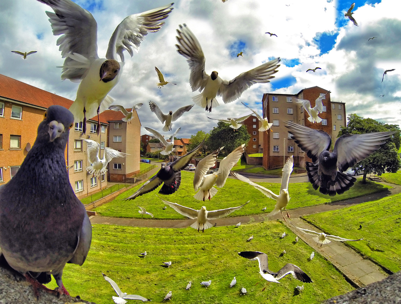 Birds by Craig Doogan