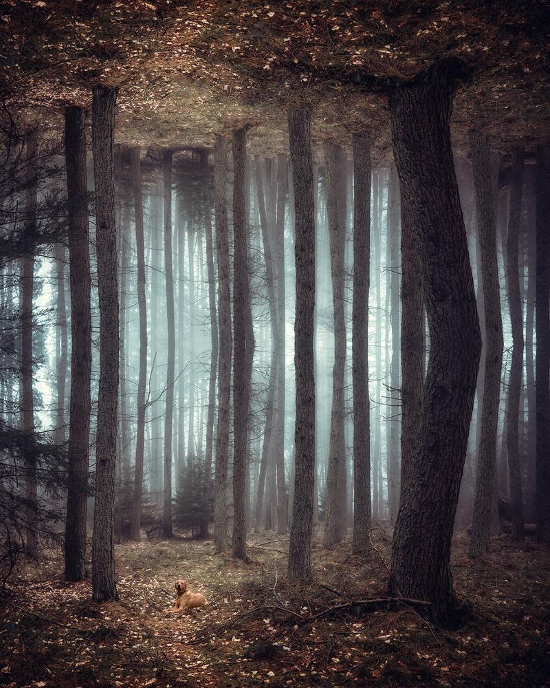 Forest Mirror by Craig Doogan