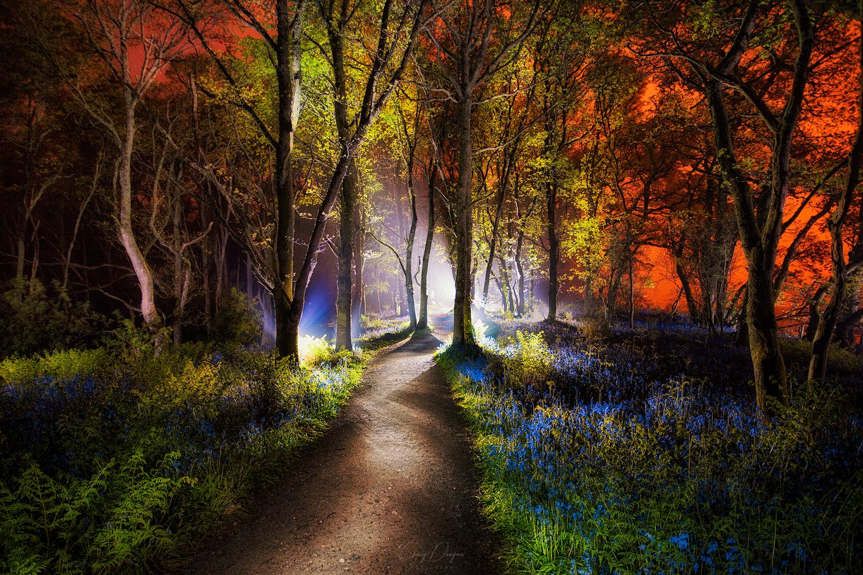 Bluebell Woods by Craig Doogan