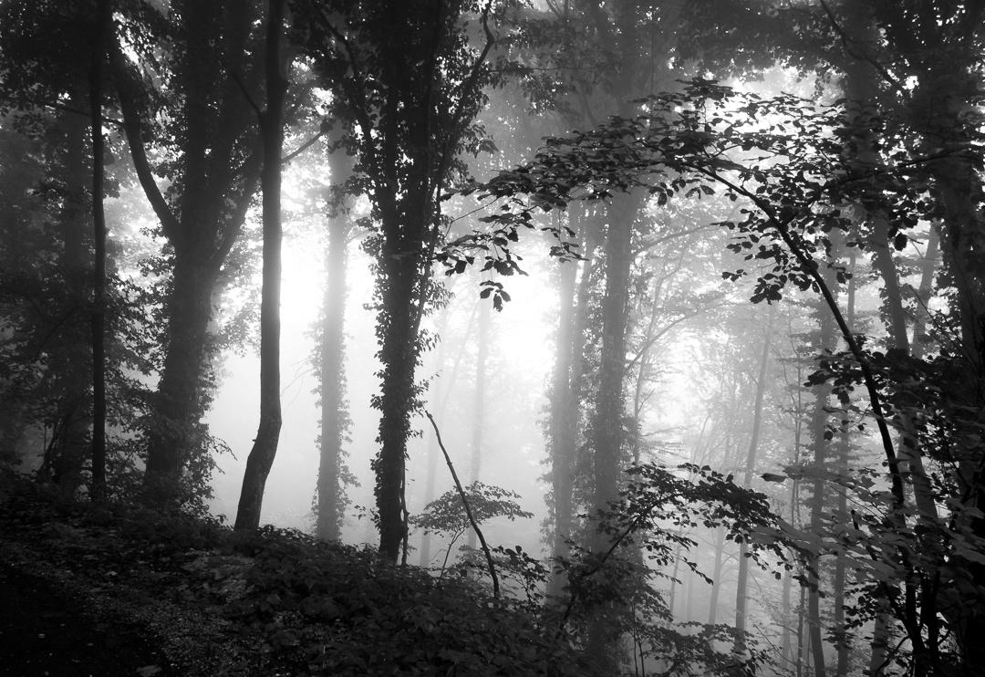 Misty forest by Tihomir Dubic