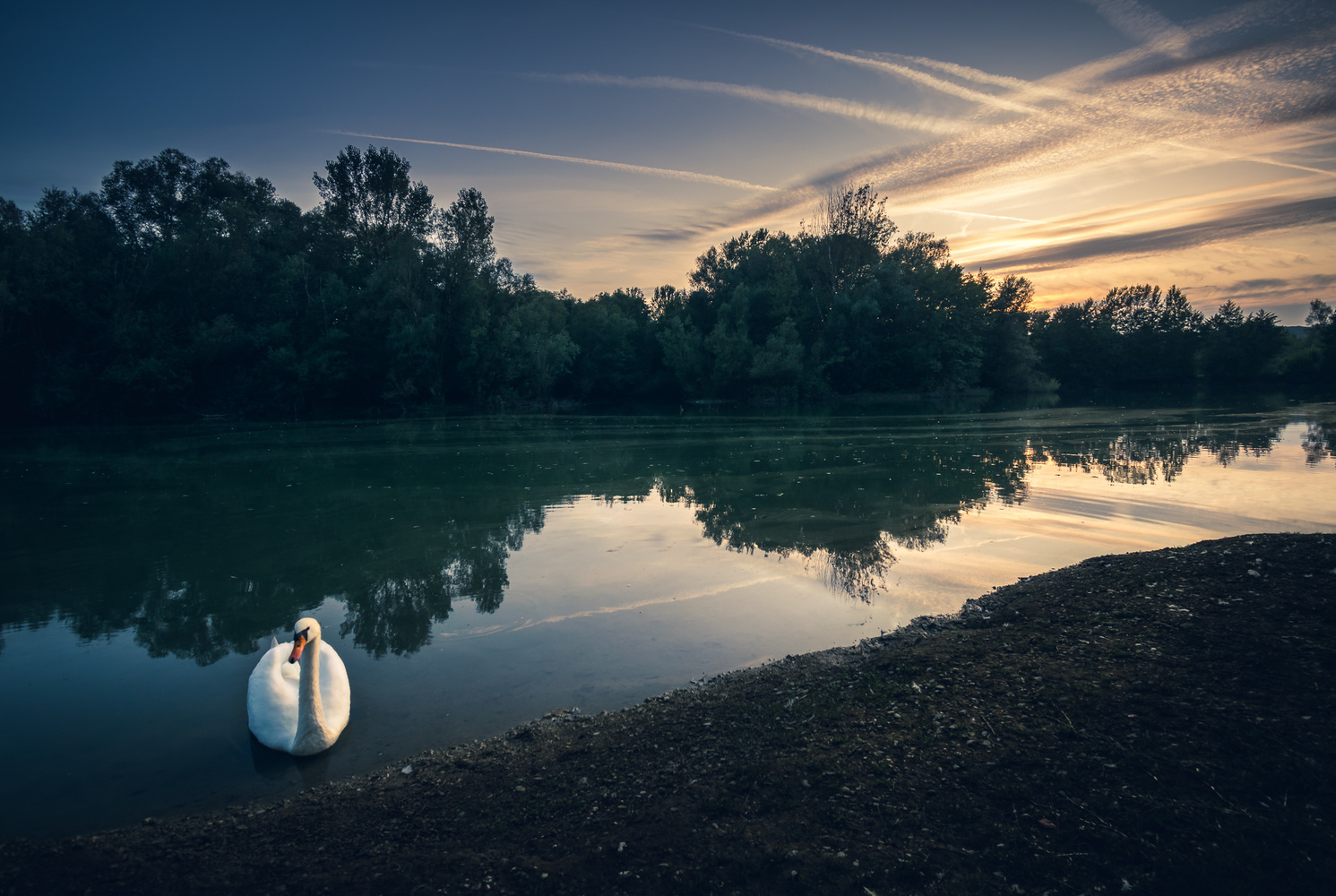 Swan and sunset by Tihomir Dubic