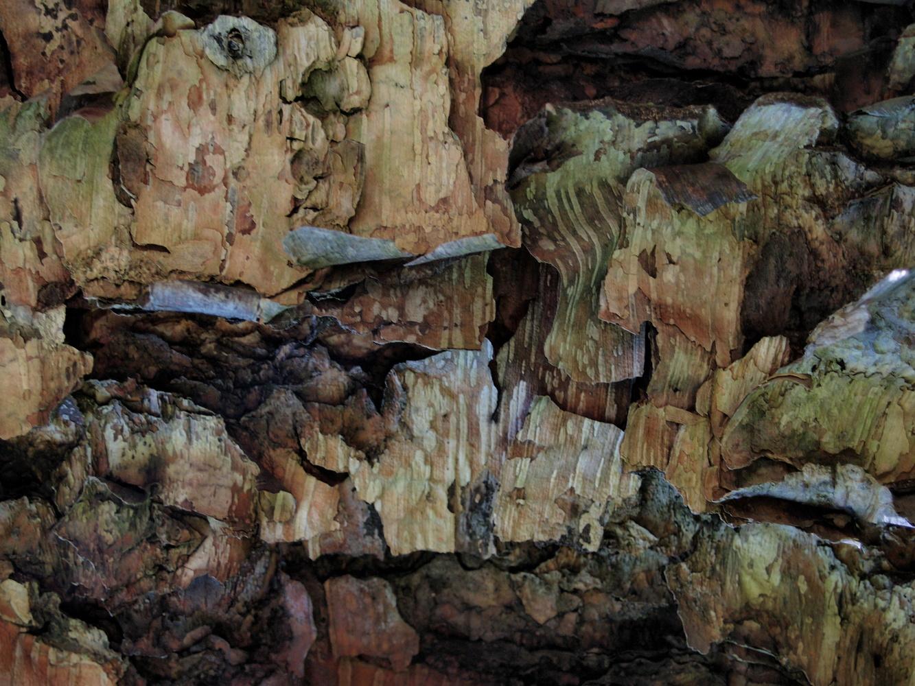 Bark Ser. 1 by James R Johnson