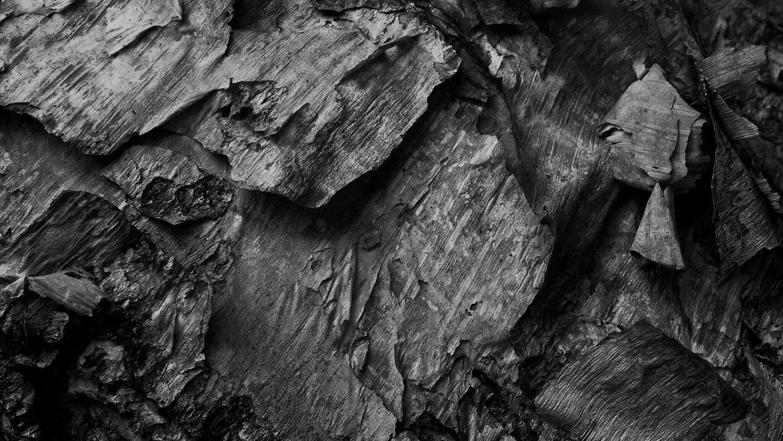 Bark 2 by James R Johnson