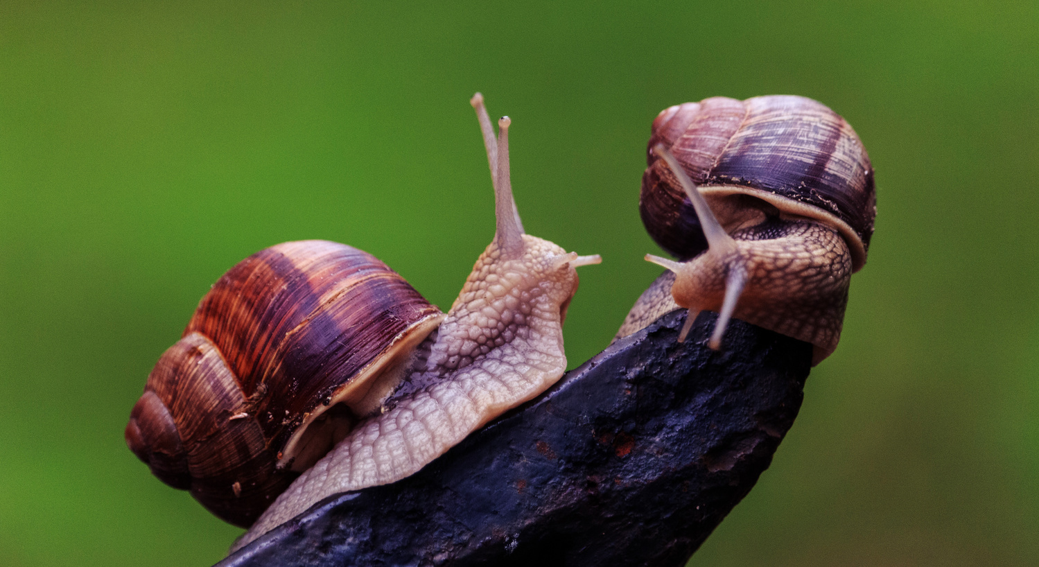the snails are talking by Robert Tas
