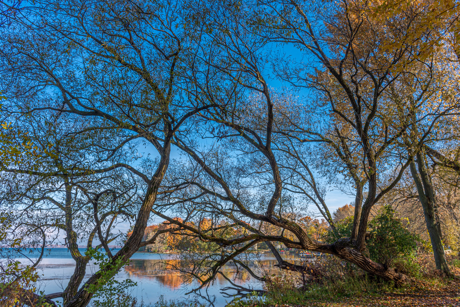 Branches by Stephen Peck