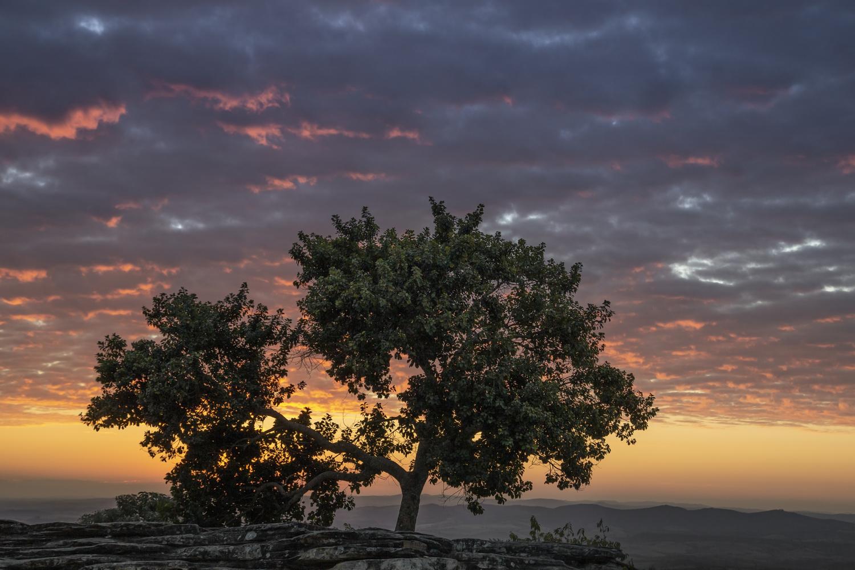 Tree by Klaus Balzano
