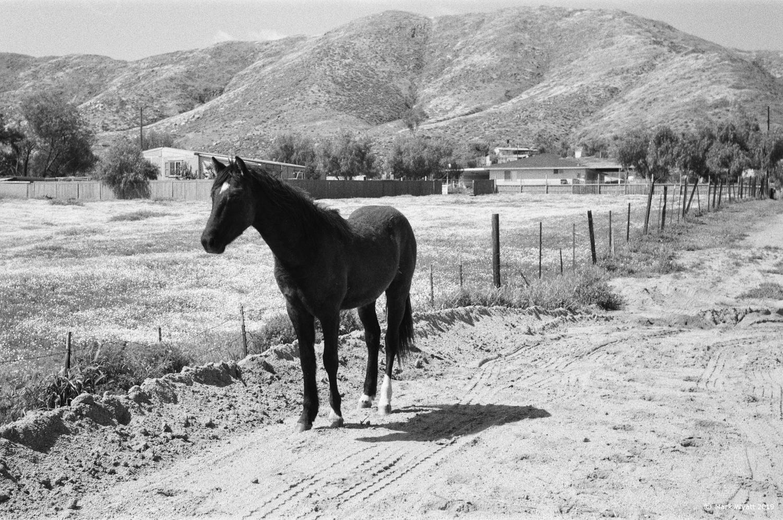 horse by Mark Wyatt