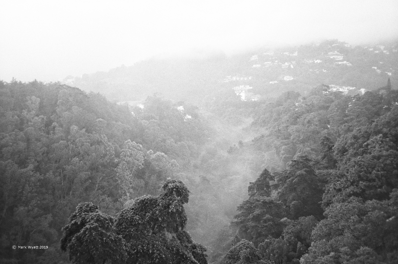 Misty Canyon by Mark Wyatt