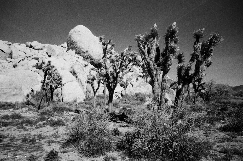 Joshua Tree and Rocks by Mark Wyatt
