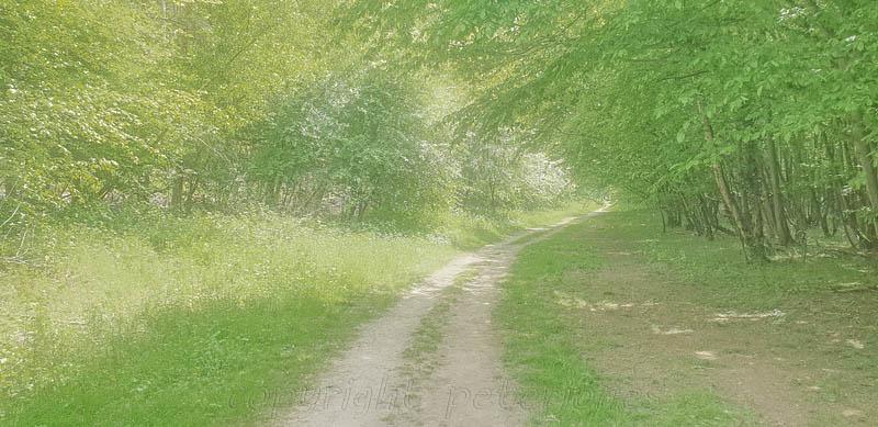 Footpath near my home in Spring. by Peter Jones