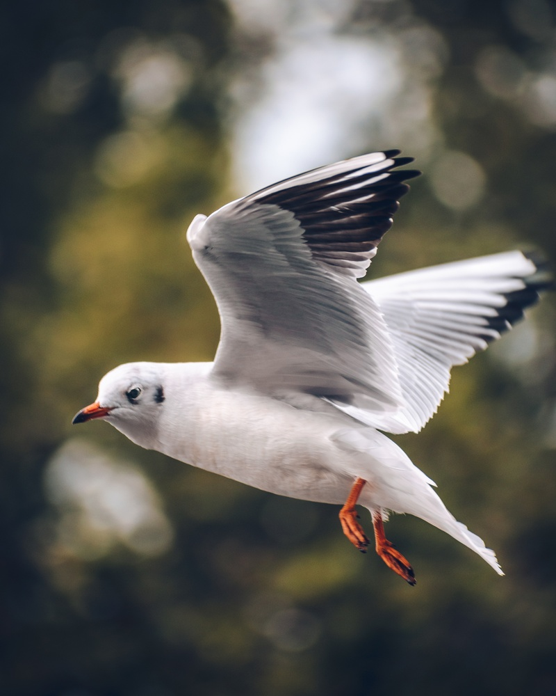 Seagull in Budapest City Park by Lina Magoula